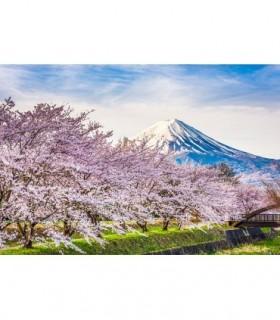 Fotomural Monte Fuji 3P