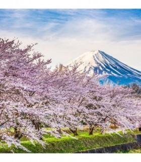 Fotomural Monte Fuji 2P