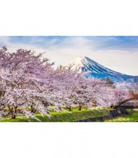 Fotomural Monte Fuji 1P