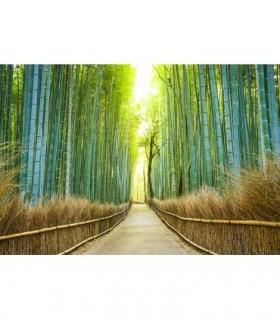 Fotomural Camino de bambú 3P