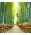 Fotomural Camino de bambú 2P