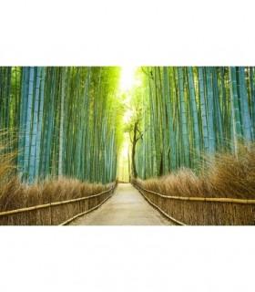 Fotomural Camino de bambú 1P