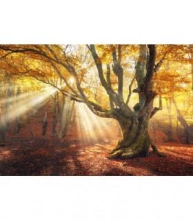 Fotomural Atardecer de otoño 3P