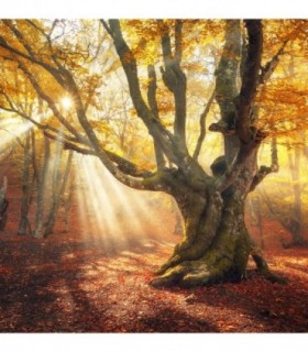 Fotomural Atardecer de otoño 2P