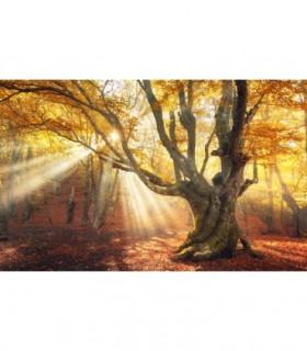 Fotomural Atardecer de otoño 1P