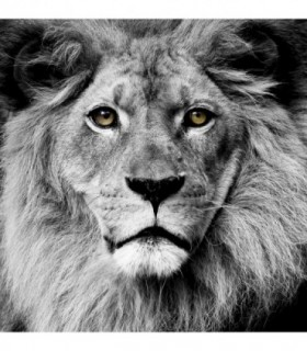 Fotomural Lion 2P