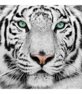 Fotomural Tiger 2P