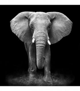 Fotomural Elephant 2P