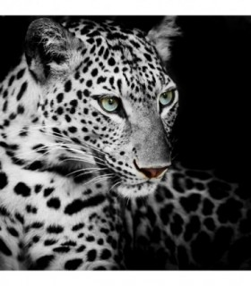 Fotomural Leopard 2P
